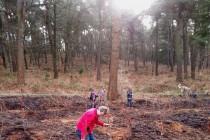 Haardbiker pflanzen Bäume